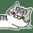 I'm Japanese cat.
