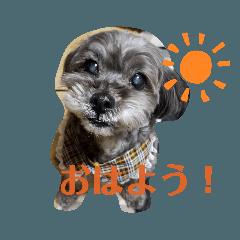 keysdog
