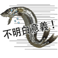 Capelin with roe Chinese version