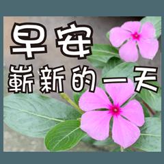花-暖かい心の長老