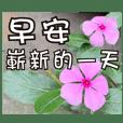 ผู้สูงอายุที่อบอุ่นใจดอกไม้