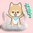 日本种小犬2