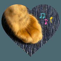 Ichi,my cat stamp