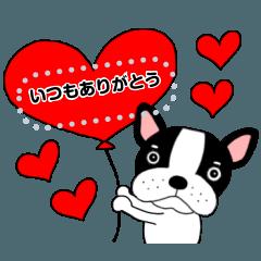 French bulldog buruchan10
