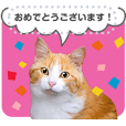 猫写真のメッセージスタンプ