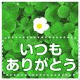 野に咲く花のメッセ―ジ