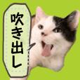 使える!猫の吹き出しメッセージスタンプ