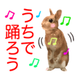 USAKO THE RABBIT4 Coronavirus version
