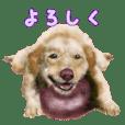 Re:Start 元保護犬スタンプ
