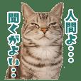 Cute and funny cat sticker