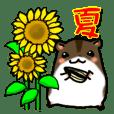Takitarou summer
