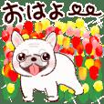 【春~夏】幸せのフレブルちゃん♡
