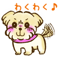 Pretty Dog - Norfolk Terrier