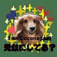 ココナツの明るい未来にSuperJump!(完結版)