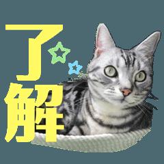 Go_go_cat2