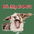 Oh My DOG!!