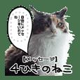 実写猫の吹き出し付きメッセージスタンプ