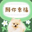 MAINICHI POME message1[CT]
