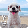 Taiwan Happy Dog 3