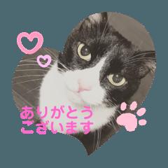 dog&cat yumi