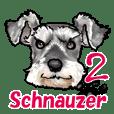 Miniature Schnauzer -2-
