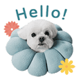 Maltese Puppy Daily