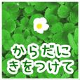 ▷大人やさしい野の花