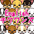 Chihuahuas English & Japanese sticker