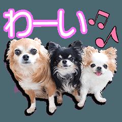 The Igarashi Family