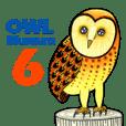 フクロウ 博物館 6