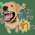 Labrador Retriever_Big body,gentle heart
