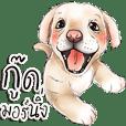 小狗可愛的狗