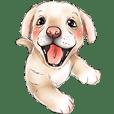 小狗可愛的狗.