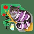 ซากุระแมว