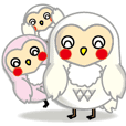 white owl family
