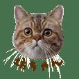 Bou qiang cat life2