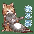 毛丸貓✦可愛圖貼✦初登場