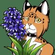 Lynx Honoe