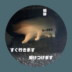 shinji_20200429145139