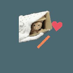 cat黃寶寶
