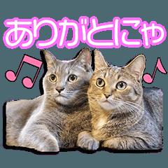 My beloved Natsu & Yuzu