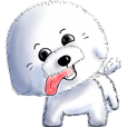 "Everything about Bichon Frise ""Noobie"""