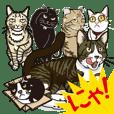 可愛く鳴くネコちゃん達