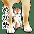 shiba (Japanese bush dog)