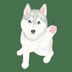 Siberian Husky Stickerenglish Line Stickers Line Store
