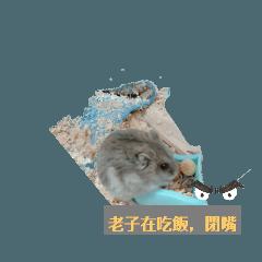 鼠鼠鼠日常