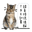Cats TNR 2020 Daily Part.1