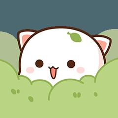 Peach Cat 7