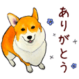 serious corgi stickers