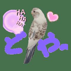 鳥ちゃん♡